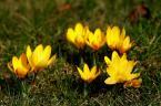 """Poszukiwanie """"Dzisiejszy ranek..."""" (2010-04-05 19:12:26) komentarzy: 2, ostatni: następne do kolekcji kreatywnych zdjęć wiosennych"""