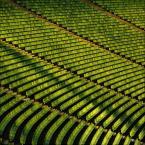 "mikerus ""Zielona pola"" (2010-04-07 18:30:35) komentarzy: 35, ostatni: zielono tu :-)"