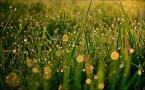 """bogumił pason """"Pierwsza zieleń"""" (2010-04-17 15:41:41) komentarzy: 1, ostatni: swietne :)"""