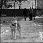 "detective ""dogfog & doghusky"" (2010-04-26 16:49:22) komentarzy: 8, ostatni: +"