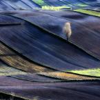 """lukier """"roztocze zaprasza swoimi ramionami"""" (2010-04-26 23:54:06) komentarzy: 31, ostatni: Efektowne. Podoba mi się."""