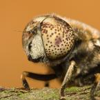 "karbonara """" (2010-04-27 20:35:02) komentarzy: 5, ostatni: Co to za owad?"