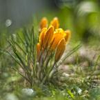 """Patulkaa """"somewhere in the grass"""" (2010-04-29 21:45:01) komentarzy: 23, ostatni: zacne :)"""