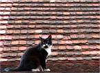 """depreska """"***"""" (2010-05-03 13:32:37) komentarzy: 4, ostatni: Każdy kot jest  śliczny - bo jest kotem. A ten jeszcze ma fajne zdjęcie :-)"""