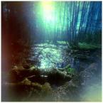 """invention """"* ( poranne pantofle Rusałki; czyli: Bagiennik w raju )"""" (2010-05-06 12:43:50) komentarzy: 3, ostatni: leśny człowiek , pikne"""