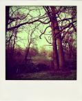 """Carlos Gustaffo """"namiętność drzew"""" (2010-05-09 10:20:23) komentarzy: 1, ostatni: Piękne kolory !"""