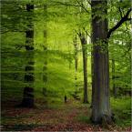 """Wołodytjowski """"Sama w wielkim lesie"""" (2010-05-09 13:33:58) komentarzy: 3, ostatni: nietrafna próba przeskalowania do kwadratu?"""