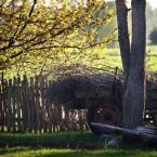 """rudamary """"wozy drabiniaste 03"""" (2010-05-17 09:15:28) komentarzy: 8, ostatni: OTI to jest wiosna.. wczesna! ;)"""
