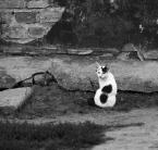 """Andrzej Klauza """"Kot po przejściach"""" (2010-05-24 16:40:17) komentarzy: 3, ostatni: wypędzony z Luksoru:)"""