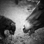 """dogfog """""""" (2010-05-24 17:38:32) komentarzy: 22, ostatni: to co?poskubiemy razem? podoba sie  seria"""
