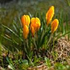 """Patulkaa """"żółte jest piękne"""" (2010-05-28 12:36:07) komentarzy: 2, ostatni: pieknie"""