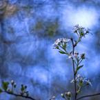 """Patulkaa """"wielki błękit"""" (2010-05-28 12:43:18) komentarzy: 7, ostatni: fajne niebieskosci"""