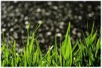 """Wojtek Oświeciński """"Grassss"""" (2010-05-30 21:22:40) komentarzy: 1, ostatni: piekna ostrosc +++"""