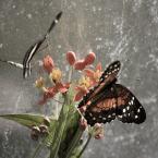 """Żaba-Ewa """"W czarodziejskim ogrodzie"""" (2010-06-07 08:57:20) komentarzy: 31, ostatni: rozkołysane w deszczu pachnącym....zatracić w takim świecie"""