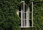 """tryksa """"okno"""" (2010-06-07 09:58:59) komentarzy: 4, ostatni: nie wiem czemu słabiutko. po mojemu poprawnie. może okno lekko w prawo jeszcze...ale sam nie wiem. według mnie jest ok (przy okazji, czy to nie Żelazowa Wola?)"""