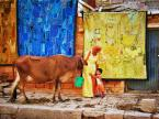 "slavcic ""United colours of Jaisalmer"" (2010-06-08 09:48:46) komentarzy: 14, ostatni: bdb......i te kolory......///"