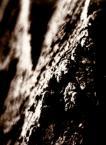 """as79 """"drzewo-baje 2"""" (2010-06-10 20:17:20) komentarzy: 3, ostatni: NO NO jest czym się popisać ,szkoda iz sam tak nie umiem ;/"""