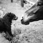 """dogfog """"próba sił?"""" (2010-06-14 13:20:33) komentarzy: 18, ostatni: Rewelacyjne foto :)"""