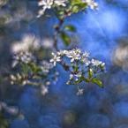 """Patulkaa """"magicznie"""" (2010-06-18 20:18:15) komentarzy: 21, ostatni: pięknie wyszło"""
