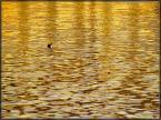 """Karol Z. """"Woda latem pozłacana"""" (2010-07-01 13:32:11) komentarzy: 3, ostatni: ładne"""