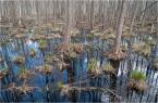 """kops """"w lesie"""" (2010-07-02 14:51:32) komentarzy: 5, ostatni: przyjemny kadr, ciekawe miejsce :)"""