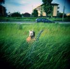 """drax """"watch out honey bunny"""" (2010-07-04 15:39:19) komentarzy: 11, ostatni: >:}"""