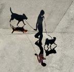 """myszok """"master of /shadow/ puppets..."""" (2010-07-05 17:19:58) komentarzy: 17, ostatni: o, ciekawe"""