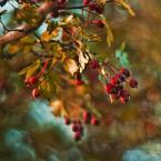 """Patulkaa """"jesiennie"""" (2010-07-11 00:21:17) komentarzy: 7, ostatni: slicznotki"""