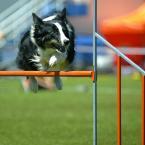 """dejuna """""""" (2010-07-11 20:06:38) komentarzy: 9, ostatni: latające psy uwielbiam te zdjęcia"""