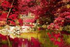 """pespe """"Ogród japoński"""" (2010-07-18 20:06:05) komentarzy: 18, ostatni: Zjawiskowe ! Witam i ciesze się,że jesteś"""