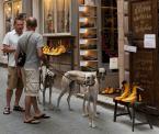 """loyza """"O Janku co psom szył buty"""" (2010-07-19 22:45:21) komentarzy: 25, ostatni: :-)... jak ja to lubię...!"""