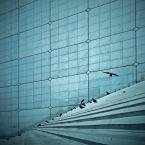 """mikerus """"Ptaki"""" (2010-07-26 16:45:25) komentarzy: 40, ostatni: mocne, świetny pomysł z wyborem perspektywy i to niepokojące odliczanie w tle 5,4,3,2..."""