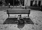 """JarekZ-68 """"... o psie co jeździł koleją ..."""" (2010-08-01 20:57:28) komentarzy: 11, ostatni: dobry fot :)"""