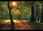 """mysliciel """"Beleriand"""" (2010-08-22 17:45:45) komentarzy: 4, ostatni: kolorystyka naprawdę urocza ...:)"""