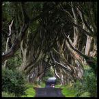 """Mnieteq """"Dark Hedges"""" (2010-08-24 10:33:06) komentarzy: 11, ostatni: tysięczny kadr z tego miejsca...ile jeszcze będzie ?"""