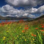 """Trollek """"Irish Summer"""" (2010-08-31 14:20:48) komentarzy: 15, ostatni: gdzie to kuśwa lato się podziało ?"""