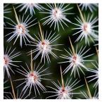 """Marcous """"kaktus"""" (2010-09-06 08:15:19) komentarzy: 1, ostatni: ciekawe makro"""