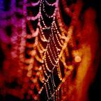 """Romek P. PISZ """"Kolorowy świat kropelek"""" (2010-09-17 22:10:34) komentarzy: 26, ostatni: Niczym perełki;) Do tego piękne kolory."""