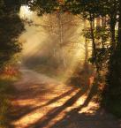 """pawello91 """"Gra światła i cienia..."""" (2010-09-20 11:32:48) komentarzy: 45, ostatni: ...*niesamowicie - nie lubię swoich literówek :)))..."""