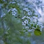 """Patulkaa """"wiosenne wspomnienia"""" (2010-09-21 15:01:32) komentarzy: 2, ostatni: beauty"""