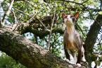 """anna66 """"moje kotki na wakacjach"""" (2010-09-22 08:41:09) komentarzy: 11, ostatni: to jest devon rex:))) zdrowy:)"""