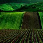 """lukier """"Zielone tsunami"""" (2010-09-28 21:33:32) komentarzy: 38, ostatni: Te pola... Trudno od nich oderwać się :)"""