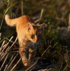 """da_tomala """"..."""" (2010-09-29 23:02:57) komentarzy: 6, ostatni: + dla kotka"""
