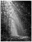"""Wojtek Oświeciński """"Świątynia Słońca"""" (2010-10-03 13:19:49) komentarzy: 2, ostatni: pięknie ułożone światło i drzewa :)"""