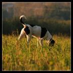 """popo007 """"krowa na wypasie..."""" (2010-10-09 21:32:03) komentarzy: 0, ostatni:"""