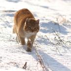 """da_tomala """"...idzie zima..."""" (2010-10-11 21:25:30) komentarzy: 2, ostatni: ...ale tygrys ;)"""