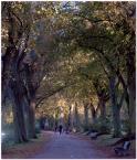 """mario1972 """"jesiennie"""" (2010-10-13 18:10:44) komentarzy: 3, ostatni: niepiękna ta tonacja, a szkoda..."""
