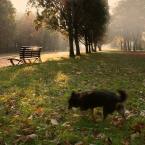 """Zeny """"Troszkę jesiennie"""" (2010-10-15 17:22:40) komentarzy: 15, ostatni: Zofinka[ 2011-06-04 18:55:42 ] Za nic psa nie obetnę!!!!"""