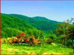 """lucyjka """"Hej góry nase góry :)"""" (2010-10-16 20:49:12) komentarzy: 11, ostatni: Zamknęłam oczy, żeby obejrzeć ;-)) Zresztą Cyrlę i tak sercem się ogląda... Pozdrawiam :)"""