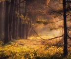 """pawello91 """"Leśne opowieśći"""" (2010-10-17 16:24:55) komentarzy: 22, ostatni: ::)"""